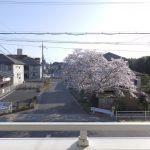 [バルコニー] 外の景色はこんな感じ。桜、きれいですね☆