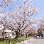 こちらはマンション裏の神社参道。桜の季節はとても綺麗です